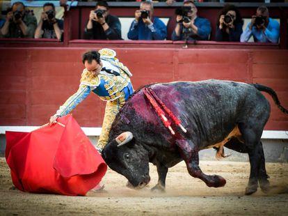 'Carasucia', de Valdellán, uno de los toros más bravos de la temporada, lidiado en Madrid el pasado 11 de junio.