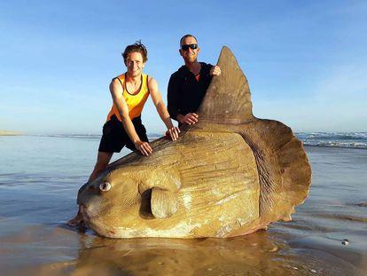 El ejemplar de pez luna aparecido en las costas australianas el pasado fin de semana.