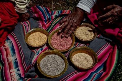 Eulalia Silva enseña los frutos de su cosecha: quinua 'huaripunchu', 'misa' y 'chulpi' que ahora ha vuelto a cultivar para su propio consumo. Pulsa en la imagen para ver la fotogalería completa.