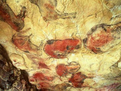 Bisontes policromados de arte rupestre en las cuevas de Altamira (Cantabria).