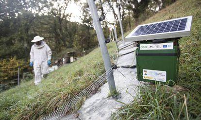 Un apicultor trabaja en un colmenar de O Courel protegido de los osos por un cercado eléctrico.