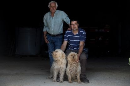 Javier Arroyo with his father Marcelino and two of the dogs they graze with.