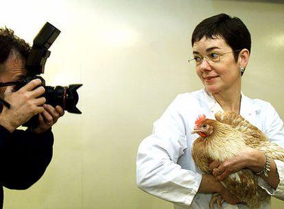 La doctora Helen Sang, con una gallina transgénica que produce interferón humano.
