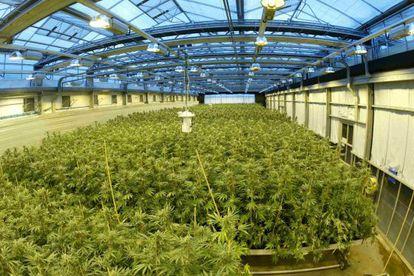 El invernadero de marihuana de GW Pharmaceuticals