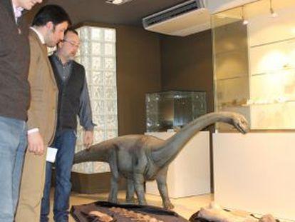 Restos del dinosaurio analizado en el Museo Paleontológico de Elche.
