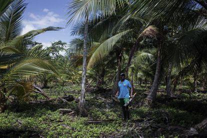 FOTOGALERÍA: Gilberto y Alicia son beneficiarios de la cooperación española para que su plantación cocotera sea más eficiente.
