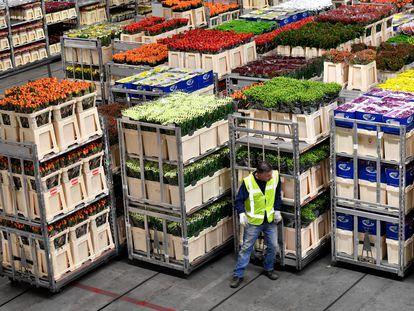 El mercado de flores más grande del mundo se encuentra en la localidad de Aalsmeer (Países Bajos).