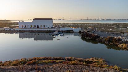 Marambay es un nuevo proyecto empresarial que ha permitido recuperar una de las muchas salinas abandonadas en la bahía de Cádiz.