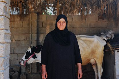Saya Ishab junto a varias vacas en el patio de su hogar. Saya perdió a su marido, Safa. De su hijo Haiza, de entonces 16 años, no conserva nada, ni siquiera una foto. Pincha en la imagen para ver la fotogalería