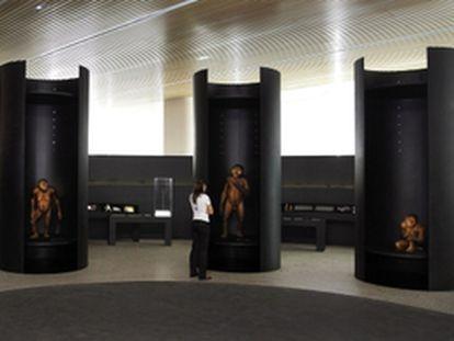 La sala de los homínidos del Museo de la Evolución Humana, en Burgos.
