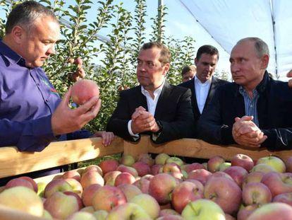Los máximos dirigentes rusos, en una empresa agrícola en Stávropol.