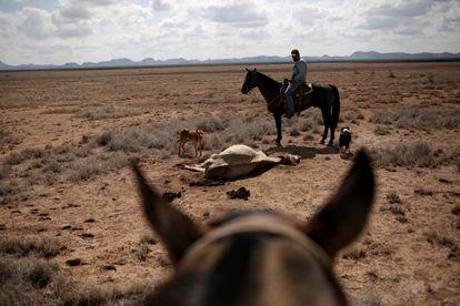 Un agricultor observa el cadáver de su ganado en el rancho de Santa Bárbara, un área afectada por la sequía cerca de Camargo, en el estado de Chihuahua, México.
