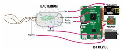 Comparación entre una bacteria de E. coli y un dispositivo de internet de las cosas controlado por una Raspberry Pi.