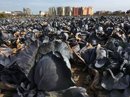 Una imagen de la huerta en el término de Valencia.