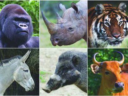 Un grupo de científicos alerta  la Tierra va camino de perder a sus mayores mamíferos