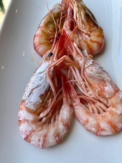 Gambas rojas de Menorca hervidas en agua de mar (primer término) y a la plancha. J.C. CAPEL