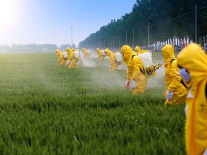 Un grupo de operarios pulveriza pesticidas en un campo de trigo.