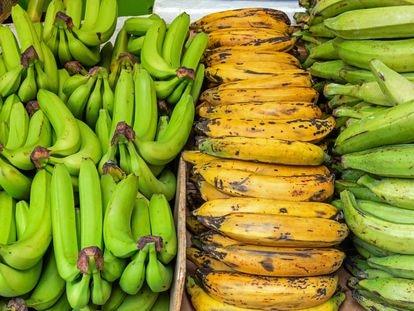 Cuidadito con equivocarse y comprar plátano macho por banana.  Ni el uno se puede comer crudo ni con el otro se pueden hacer las mejores receta del caribe