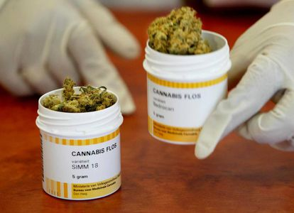 Cannabis medicinal en una farmacia de Rotterdam, en Países Bajos, país pionero en la legalización de la sustancia.