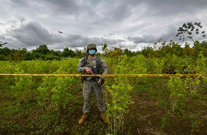 Un soldado colombiano durante un operativo para erradicar cultivos de coca en Tumaco, Nariño, en diciembre de 2020.