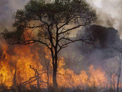 Un fuego provocado por pastores en República Centroafricana para despejar terreno para sus animales.