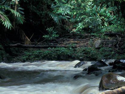 Indonesia es uno de los poaíses más amenzados por la deforestación de bosque tropical.