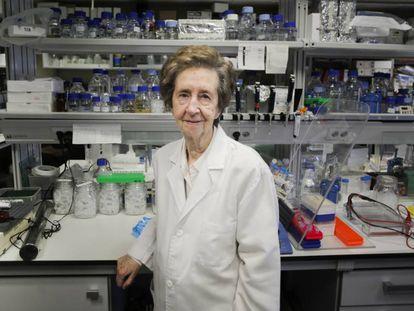 La científica Margarita Salas, en el Centro de Biología Molecular Severo Ochoa en 2015.