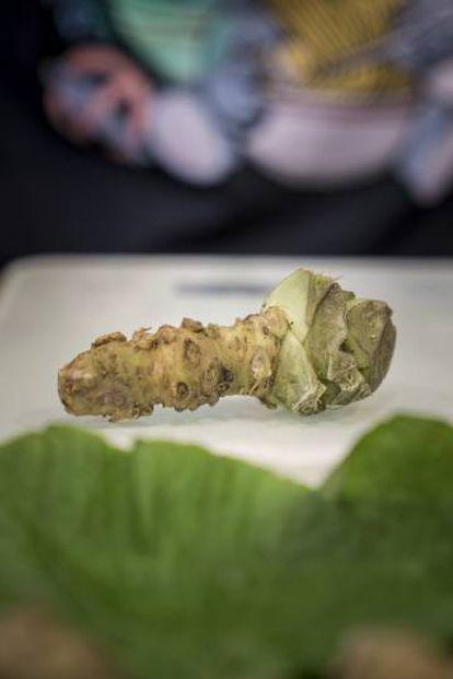 El tronco del wasabi.