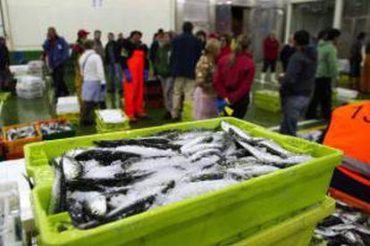 Los ciudadanos europeos pagan tres veces por el pescado que consumen, como resultado del actual estado de los recursos marinos y de las subvenciones, según un informe publicado de New Economics Foundation. EFE/Archivo