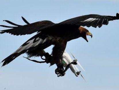 La proliferación de aparatos voladores multiplica los choques con las criaturas de la naturaleza