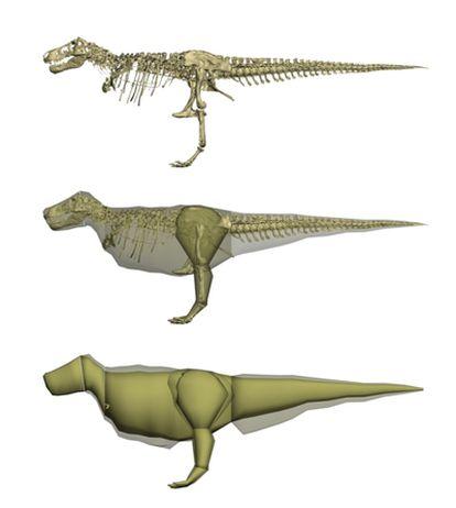 Imagen esquemática del modelo por ordenador del tiranosauro rex apodado <i>Sue</i> a partir del esqueleto escaneado y mostrando como sería el animal en la versión de extrema delgadez y de obesidad.