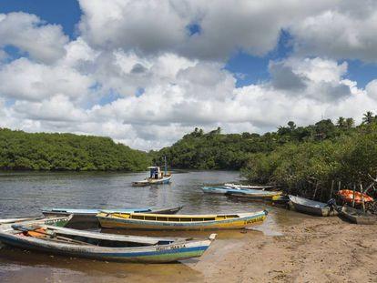 Barcos de pesca entre los manglares de Bahía, Brasil.