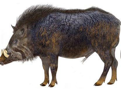 Representación del jabalí antecesor del actual cerdo ibérico que dejó su huella en la costa de Huelva hace 106.000 años.