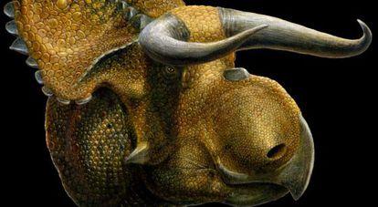 El nombre Nasutoceratops Titusi se traduce: gran nariz, cuerno-cara.