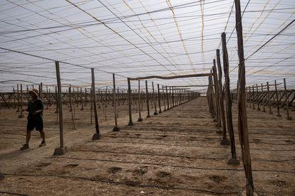 Interior de un invernadero en El Ejido este verano, antes de la siembra de hortalizas.