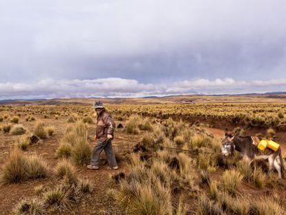 Jacinto Sirpa Condori, campesino aimara, camina todos los días con su burro cargado de bidones durante una hora en busca de agua a un humedal cercano a su casa.