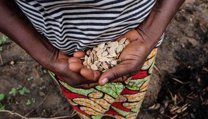 Una mujer sostiene un puñado de semillas en República Centroafricana.