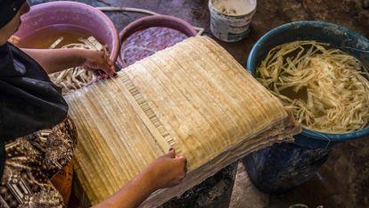 Mantener vivo el papiro en Egipto, pese a la pandemia