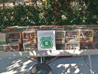 En solo dos años, en Cataluña se han decomisado unos 2.500 pájaros fringílidos del mercado negro.