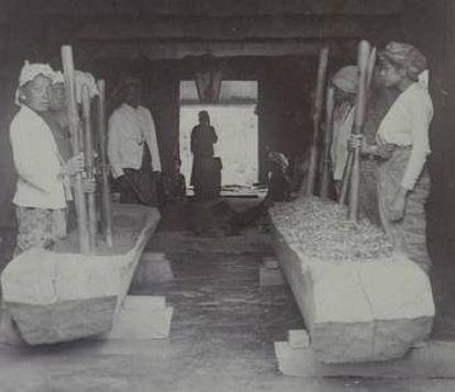 Trabajadores aplastan hojas de coca en la isla de Java a principios del siglo XX.