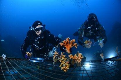 Una de las primeras estructuras colocadas bajo el agua para recuperar los corales.