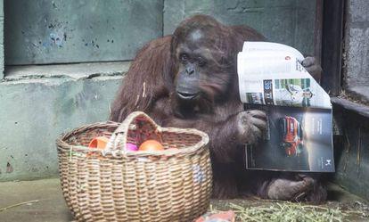 Sandra con una revista junto a la cesta con su comida.