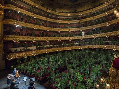 Un total de 2.292 plantas se 'sentaron' en las butacas del Gran Teatro del Liceo, en Barcelona, en junio. Ante ellas, el UceLi Quartet interpretó el 'Crisantemi', de Puccini.