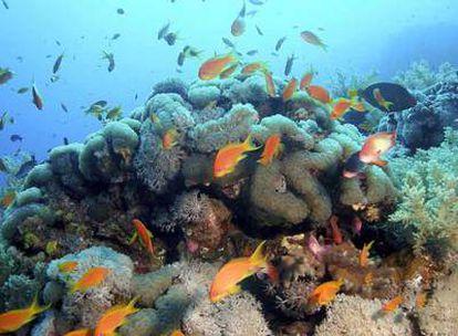 Imagen del fondo del mar Rojo.