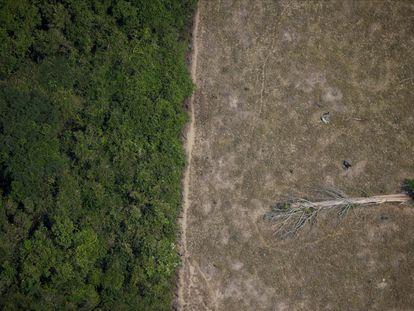 Imagen aérea de una zona talada en la Amazonia por madereros y granjeros, en 2020.