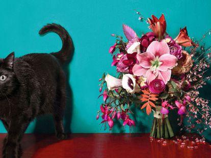 Elisabeth Blumen recrea para EL PAÍS SEMANAL las flores que mejor representan estas cinco relaciones explosivas. Pincha para verlas.