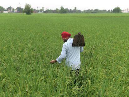 Un agricultor, a las afueras de Amritsar (India).
