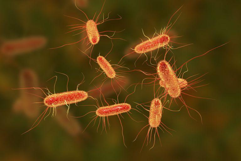 Una Ilustración computarizada de la bacteria 'Escherichia coli', utilizada por los científicos para probar el nuevo antibiótico