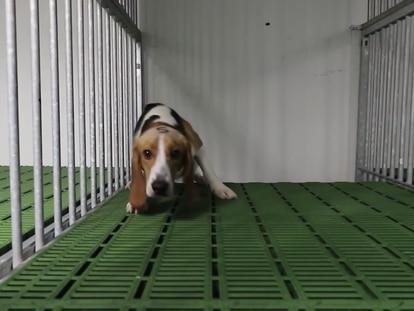 Captura del vídeo publicado por Cruelty Free International.