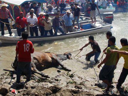 Una fiesta popular mexicana se ensaña con los toros viejos